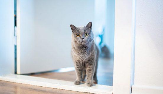 Cat standing in the doorway